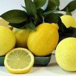 Целые, резаные, с добавками и без: лучшие «рецепты» длительного хранения лимонов дома
